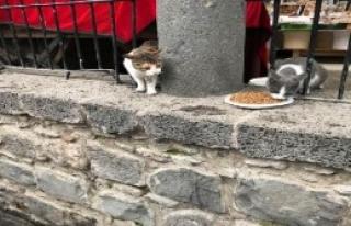 Mahallelerdeki Hayvanları Doyuruyor