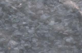 İstanbul Boğazı'nda Deniz Anası Şaşkınlığı
