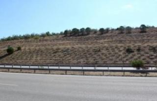 İzmir-Çeşme Otoyolu Yeşillenecek