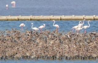 İzmir Kuş Cenneti'nden Güzel Haber