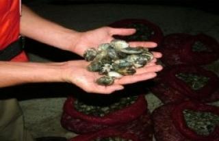 29 Ton Midye Denize Bırakıldı