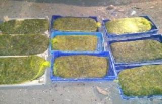 Kaçak Kurbağa Avına 175 Bin 965 Lira Ceza