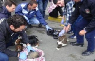 Çantalardan 10 Yavru Köpek Çıktı