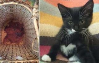 Kedi Katili Hapse Mahkûm Oldu