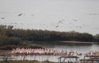 Kuşların Manyas'ta Cennet Molası
