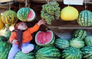 Meyveleri 'Hevenkten' Yiyorlar