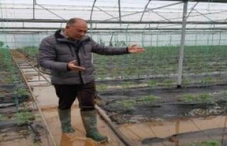 Ortaca'da Narenciye Bahçeleri ve Seralara Su Baskını