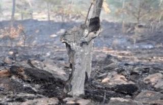 Osmaniye'de 10 Hektar Orman Yandı