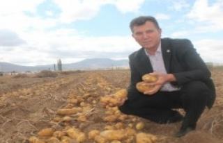 Patates Üreticisinin 1 Lira Umudu