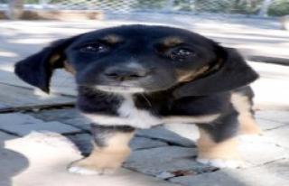 3 Bin Kedi- Köpek Sahiplendirildi