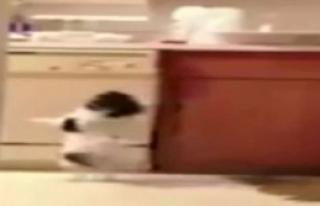 Sevimli Köpekten İlginç Dans