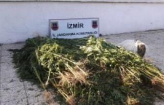 Tire'de Uyuşturucu Operasyonu