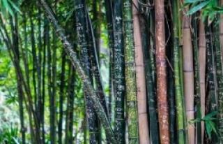 'Ormanlar Artık Gezegeni Kirletiyor'