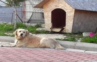 Üç Köpek Zehirlenerek Öldürüldü