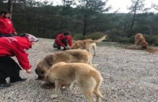 Spil Dağı'ndaki Hayvanları Beslediler