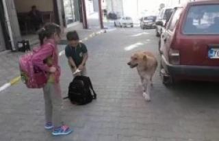 Yaralı Köpeğe Çocuk Şefkati