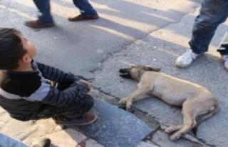 Yavru Köpeğin Yardımına Koştular
