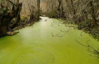 Büyük Menderes'teki balık ölümlerinin çaresi 'temiz üretim'