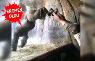 Sosyal medyada fenomen olan Goril