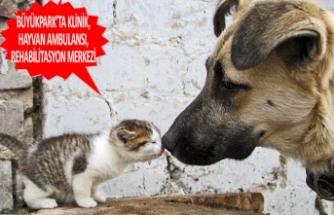 Bornova Belediyesi hayvanlara sahip çıkıyor