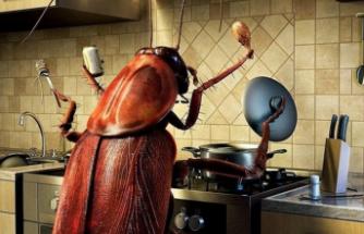 Evdeki hamam böceklerinden kurtaran ilaçsız yöntemler...