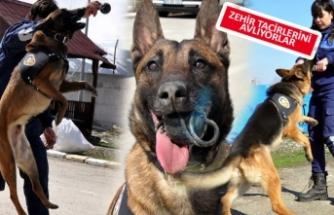 İzmir'de narkotik köpekler yetiştiriliyor