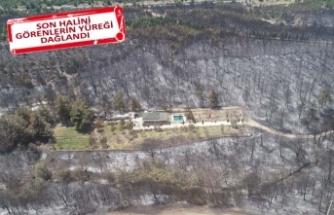İzmir'in ciğeri yandı, yemyeşil orman kömüre döndü