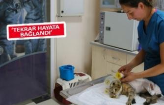 Kaynar su ile yaralanmış kediye hayvanseverlerden şefkatli tedavi