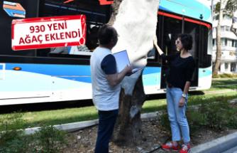 İzmir'de asırlık çınarlara gençlik aşısı