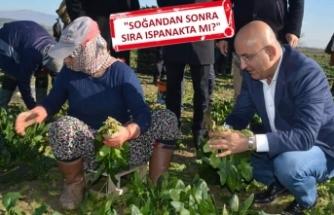 CHP'li Polat'tan 'tarla' çıkarması