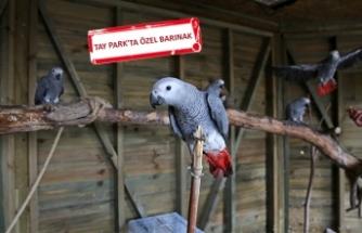 Kaçak papağanların yeni yuvası Karşıyaka oldu