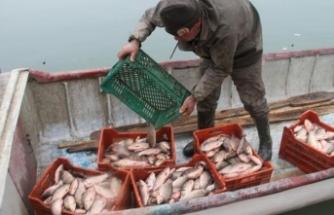 Balıkçıların yeni umudu oldu! Kilosu 1 TL