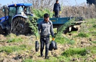 İZSU'dan Tahtalı Havzası'na 1 milyon 109 bin fidan