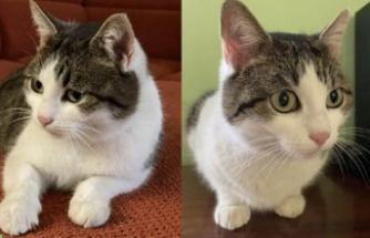 """""""Şifacı kedi"""" 320 bin dolara satışa çıkarıldı"""