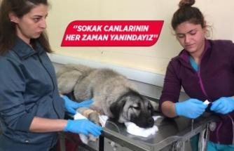 Menemen Belediyesi sokak köpeği için seferber oldu