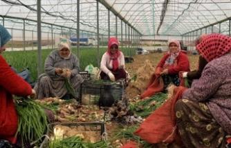 """Dalaman'da 65 yaş üstü çiftçilerden """"özel izin"""" talebi"""