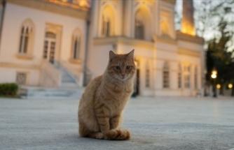Vali Yerlikaya'dan sokak hayvanlarına destek paylaşımı