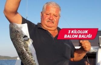 İzmirli avcının oltasına balon balığı takıldı