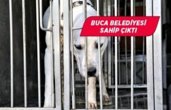 Şiddet mağduru köpeğe Buca Belediyesi sahip çıktı