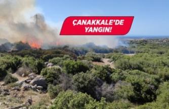 Çanakkale'de makilik alanda yangın