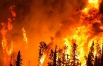 Çanakkale'de orman yangını kontrol altına alındı