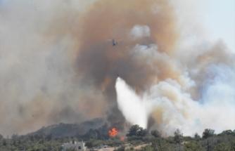 Çanakkale'deki zeytinlik yangını kontrol altına alındı