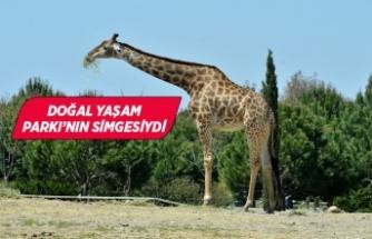 "İzmir Doğal Yaşam Parkı'nın ""Zarife""si hayatını kaybetti"