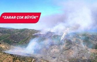 Muğla'da, zeytinlikler ve ormanlar yandı