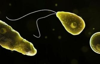 ABD'de beyin yiyen amip paniği: İçme suyunda bulundu