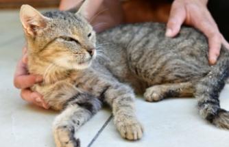 Çiğli Belediyesi ve hayvan dostlarından büyük işbirliği