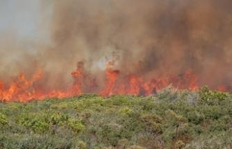 Didim'de 30 hektarlık alan küle döndü