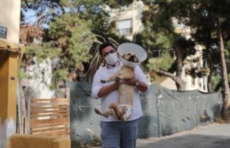 İzmir Karabağlar'da 4 köpek saldırdı! O kişi şikayetçi oldu