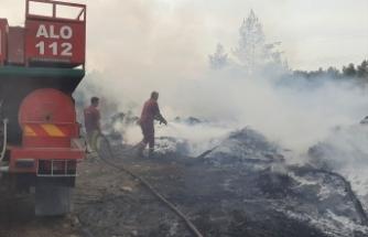 İzmir Buca'da orman yangını!