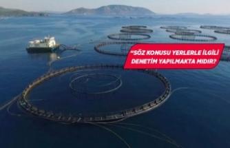 İzmir'de tepki çeken balık çiftlikleri meclis gündeminde!